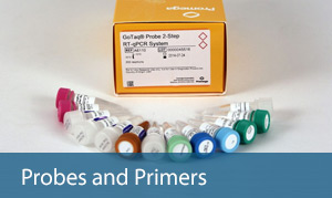 probes and primers